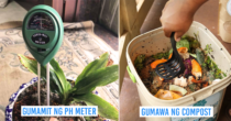 10 Gardening Tips Para Hindi Malanta At Dumilaw Ang Halaman Mo