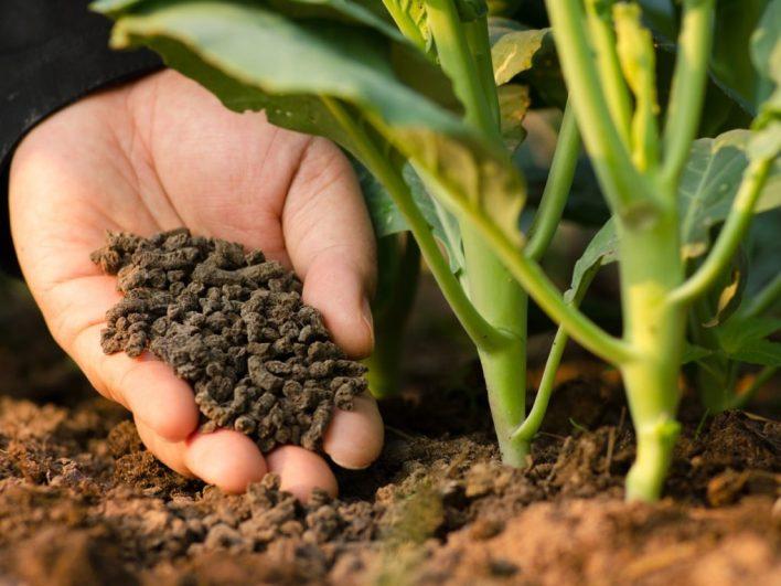 Madalas na paggamit ng fertilizer o pataba